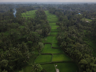 Beautiful bright green rice fields at Tegallalang in Bali, Indonesia captures by drone