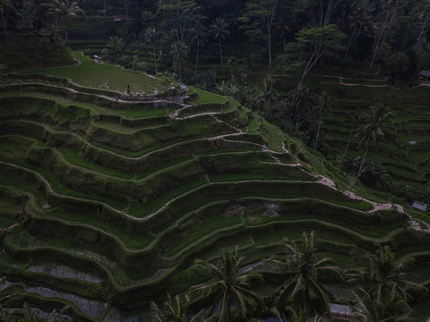 Moody drone shot of the Tegallalang Rice Terraces in Bali, Indonesia