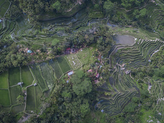 The famous tourist attraction at the Tegallalang Rice Terraces in Bali, Indonesia