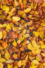 Nasses Laub am Boden im Herbst