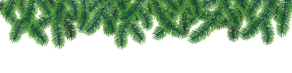 Vector seamless winter coniferous tree branches with needle leaves on white background.