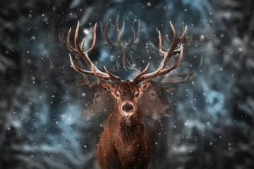Noble deer male in winter snow forest. Multi exposure