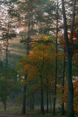 Promienie jesiennego słońca przechodzące przez drzewa