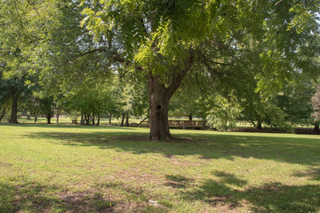 A pretty open view at the park on a sunny summer day