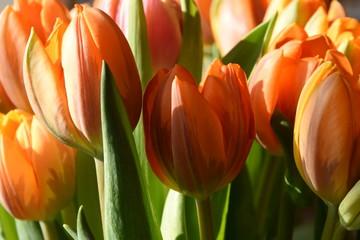 Foto auf Acrylglas Blumenhändler een boeket oranje tulpen in een vaas