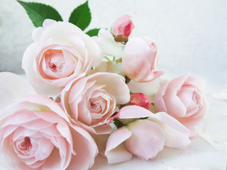 Pink roses isolated on white background. Perfect for background greeting cards and invitations of the wedding, birthday, Valentine's Day, Mother's Day