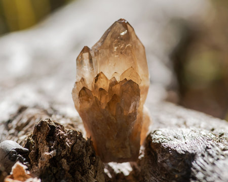 Small Smokey Citrine cluster from Congo on fibrous tree bark in the forest.