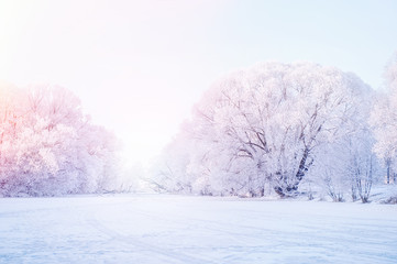 Winter Christmas picturesque background with copy space. Snowy landscape with trees covered with snow, outdoors