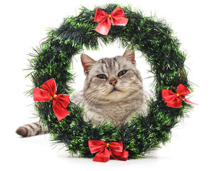 Cat in a Christmas wreath.