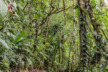 Rain forest canopy view, Sarapiqui Costa Rica