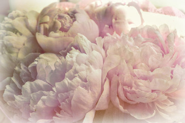 Delicate Peonies Flowers Retro Photo - Pink Provence Design