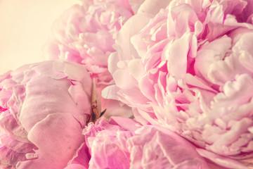 Balmy Shabby Chic Pink Peonies Flowers Retro Photo