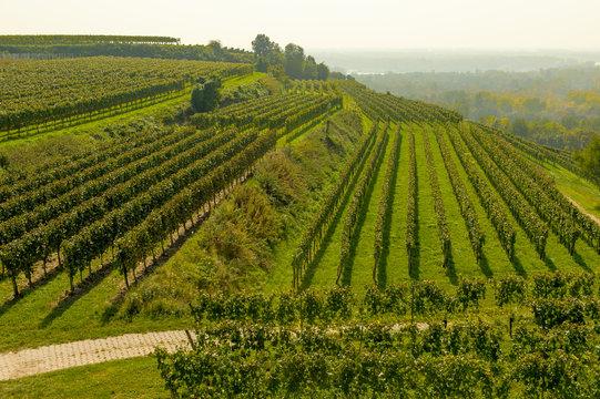 Weinterrassen, Weinberge im Kaiserstuhl, Panorama