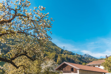 Beautiful view near Bergen - Bavaria - Germany
