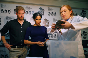 Britain's Prince Harry and Meghan, the Duchess of Sussex look at kiwi chicks as they visit the National Kiwi Hatchery at Rainbow Springs, Rotorua
