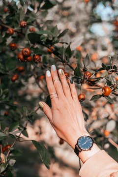 Woman hand with beautiful minimalistic manicure with geometry design, rings and black watches on the fall red malus apples tree background.