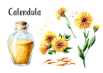 Calendula marigold tincture set with fresh calendula flowers and glass bottle. Watercolor hand drawn illustration,  isolated on white background
