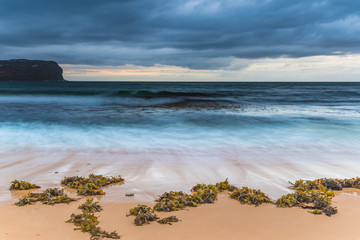 Seaweed by the Stormy Seashore