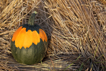 vegetable with an unusual coloring/ one pumpkin on the background of hay