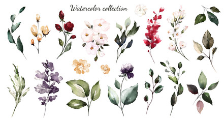 Set watercolor elements - wildflowers, herbs, leaf. collection garden and wild, forest herb, flowers, branches.  illustration isolated on white background,  leaf. Botanic