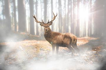 Hirsch bei Nebel im herbstlichen Wald bei Lichteinfall Wall mural