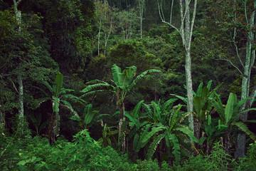 dense green jungle in Sri Lanka, background