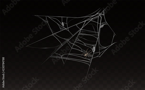 Vector collection of realistic cobweb with spider on it  Web with