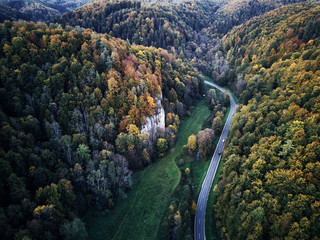 street between autumn trees in the forest aerial drone view from above, dji mavic