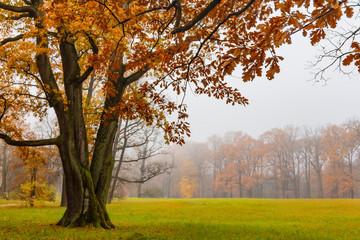 Autumn. Catherine Park. Pushkin, St. Petersburg, Russia