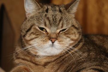 closeup portrait of a cat