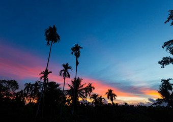 palm trees and sunrise