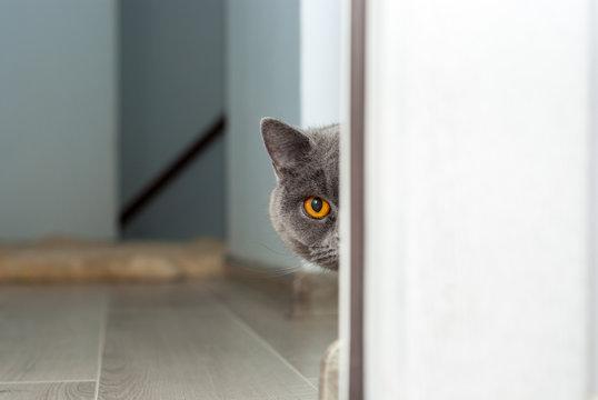 The cat looks around the corner