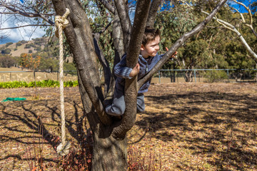Small boy climbing a tree in the Australian countryside.
