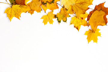 Border of colorful autumn maple leaves on white background