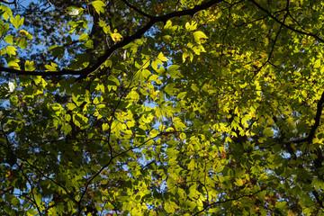 山 / 木 / 植物のイメージ