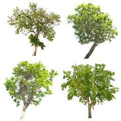 Group of tree on white background.