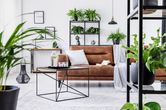 Urban jungle in modern living room interior with big comfortable leather couch and coffee table.