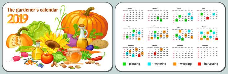 Template pocket calendar year 2019 for gardener. Vector illustration with vegetable.