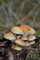 Jesienią w Borach Tucholskich