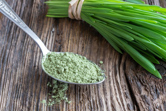 Barley grass powder with freshly harvested blades