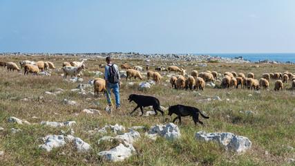 Schäfer mit Ziegen- und Schafherde in Apulien; Italien