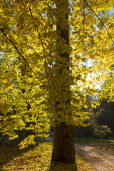 Autumn landscape in the Alexandria Park. Bila Tserkva, Kyiv region of Ukraine.