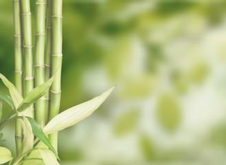 Poster Bamboe Many bamboo stalks on background