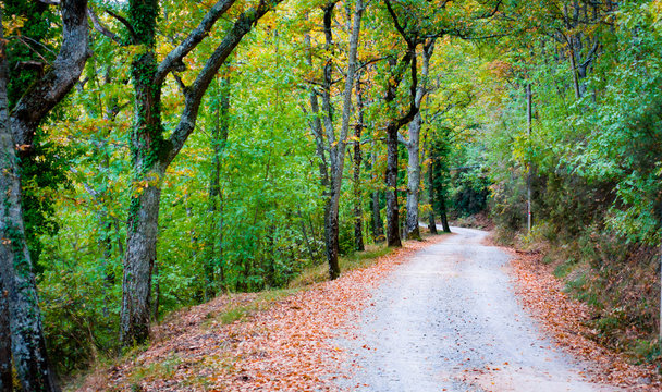 Road in the forest to Badia a Coltibuono