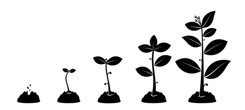 Planting seed sprout in ground. Infographic silhouette sequence grow sapling. Flat icon seedling gardening tree. Vector illustration. Isolated on white background.