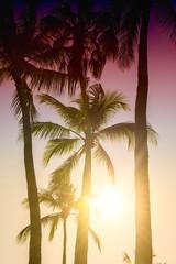 Palm trees silhouette. Beautiful tropical background, sun glare, retro, vintage filter.