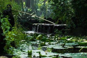 Estanque de ambiente selvático con cascada 2