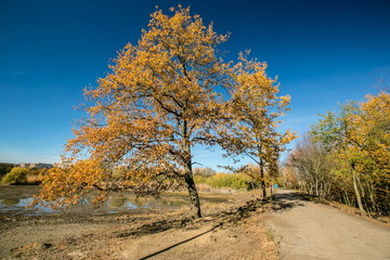 Bright colorful view of sunny autumn landscape, clear blue sky, orange trees, stony embankment, shadows, foot path