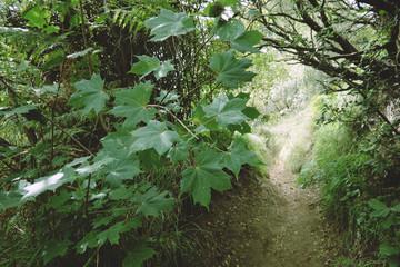 Wall Mural - Hiking Trail Trough Dense Vegetation