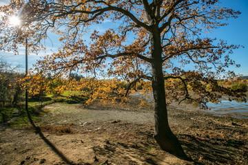 Bright colorful sunny autumn landscape, clear blue sky, orange trees, stony embankment, shadows, sun beam, lake